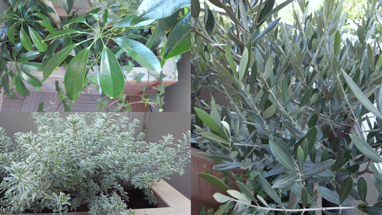 観葉植物でベランダを癒しのスペースに